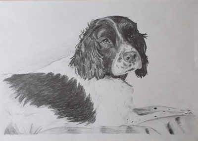 Pencil drawing of Bracken, part of the preparation for my blackwork embroidery