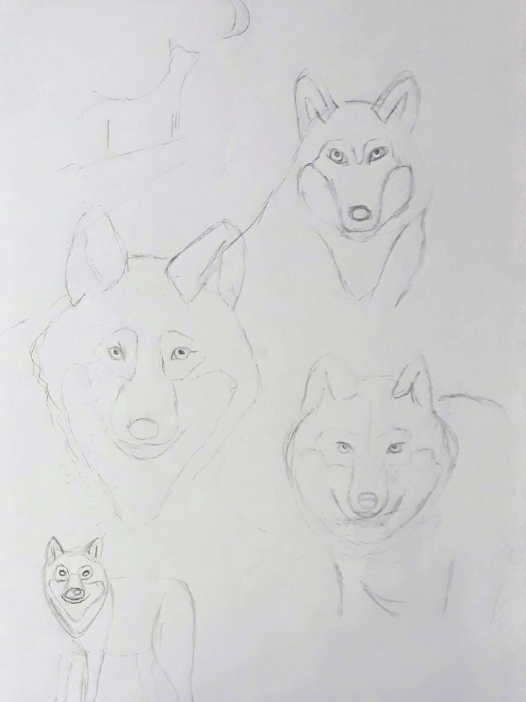Quick pencil sketches of wolves.