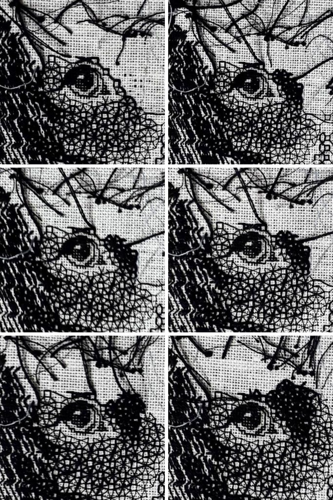 A montage of 6 photos showing the stagges of stitching around Bracken's eye.